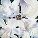 Four white flowers focus on the beauty of each one, lily, gardenia, daffodil and callalily.